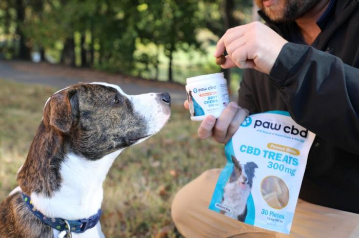 Ready to Try CBD Treats for Your Dog?