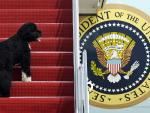 Pets are Back: Biden's 2 Dogs Settle in at White House